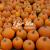 3 for 30a pumpkins