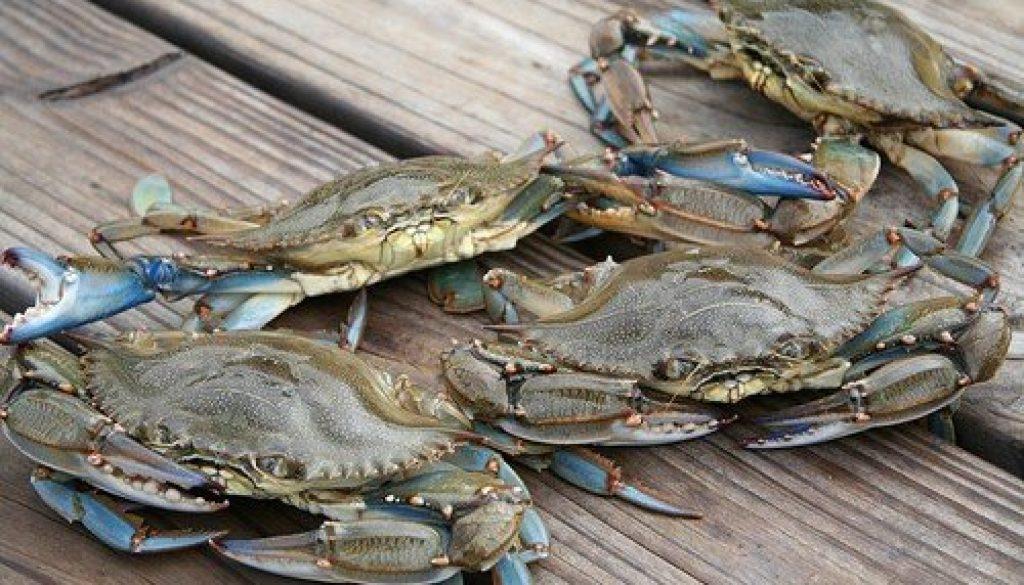 Blue_Crab_Festival