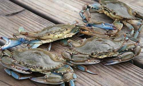 3 for 30a – Blue Crabs, Idyll Hounds and Christian Siriano